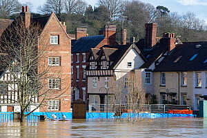 River Severn floodwaters in town of Bewdley. The river overtopped the flood barriers following Storm Ciara and Storm Dennis, the wettest February recorded in the UK. Worcestershire, England, UK. Febru...  -  Ashley Cooper