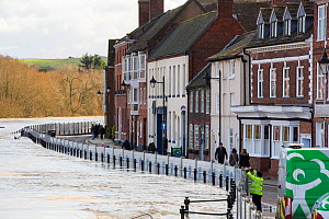 Flood defences alongside flooded River Severn, river overtopped the barriers. After Storm Ciara and Storm Dennis, the wettest February recorded in the UK. Bewdley, Worcestershire, England, UK. Februar...  -  Ashley Cooper