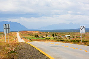 Road through grassland plain, between Puerto Natales and Torres del Paine, mountains in distance. Magallanes, Patagonia, Chile. January 2020.  -  Ashley Cooper