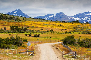 Road to Lago Sofia through grassland and scrub, mountains in background. Magallanes, Patagonia, Chile. January 2020.  -  Ashley Cooper