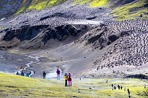 Tourists from expedition cruise ship amongst Chinstrap penguin (Pygoscelis antarcticus) colony. Breeding bird numbers have rapidly declined from 100,000 to 20,000 in the past thirty years. Baily Head,...  -  Ashley Cooper