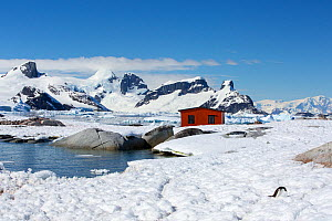Gentoo penguin (Pygoscelis papua) in snow near Argentine refuge hut, mountains of Graham Land in background. Petermann Island, Antarctica. December 2019.  -  Ashley Cooper
