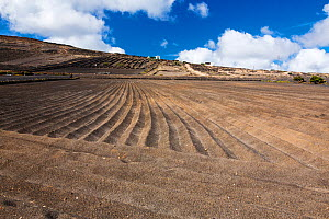 Ploughed field with volcanic soil. Montana Blanca, Lanzarote, Canary Islands, Spain. November 2019.  -  Ashley Cooper