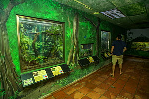 Visitors looking at the reptile and amphibian displays at the Panama Amphibian Rescue and Conservation Project Center, El Valle de Anton, Panama.  -  Emanuele Biggi
