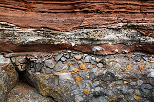 Conglomerate rock at unconformity between Carboniferous limestone and Triassic sandstone. Sully, South Glamorgan, Wales, UK. September 2018.  -  Graham Eaton