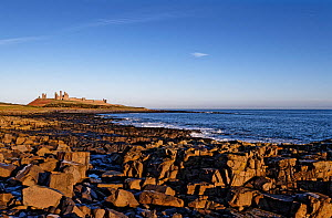 Beach with blocks of columnar basalt of the Whin Sill, Dunstanburgh Castle on headland in background. Craster, Northumberland, UK. December 2019.  -  Graham Eaton