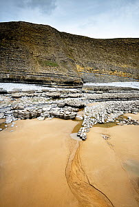 Fault on cliff and foreshore, displacing layers of Blue Lias rock from the Jurassic age. Southerndown, South Glamorgan Heritage Coast, Wales, UK. September 2018.  -  Graham Eaton