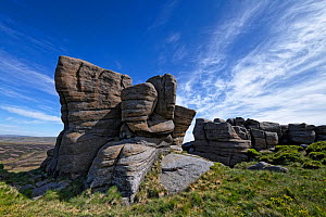 The Boxing Glove, an exposure of eroded and sculpted millstone grit sandstone from the carboniferous period. North Face of Kinder Scout, near Glossop, Peak District National Park, England, UK. June 20...  -  Graham Eaton