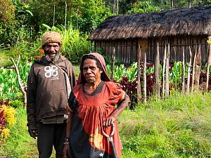 Papuan couple in their garden, hut in background, portrait. Bogo, Kerowagi District, Simbu Province, Papua New Guinea. 2019.  -  Konrad Wothe