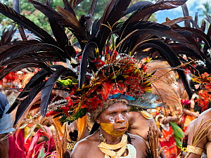 Papuan with painted face and headdress participating in Sing-sing gathering where traditional cultures including dance and music are shared. Morobe Show, Lae, Papua New Guinea. 2019.  -  Konrad Wothe