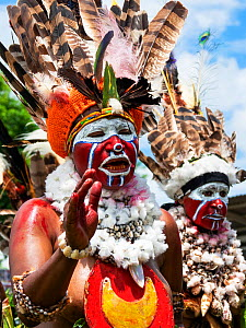 Papuan people in traditional dress with headdresses and necklaces. At Sing-sing gathering where traditional cultures including dance and music are shared. Morobe Show, Lae, Papua New Guinea. 2019.  -  Konrad Wothe