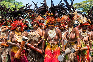 Papuan women participating in Sing-sing gathering to share traditional cultures including dance and music. Morobe Show, Lae, Morobe Province, Papua New Guinea. 2019.  -  Konrad Wothe