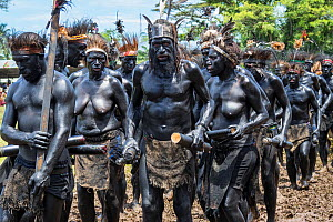 Papuan people covered in black body paint participating in Sing-sing gathering to share traditional culture including dance and music. Morobe Show, Lae, Morobe Province, Papua New Guinea. 2019.  -  Konrad Wothe
