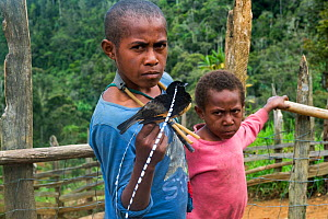 Papuan boys with King of Saxony bird of paradise (Pteridophora alberti), killed with slingshot. Eastern Highlands, Papua New Guinea. 2019.  -  Konrad Wothe