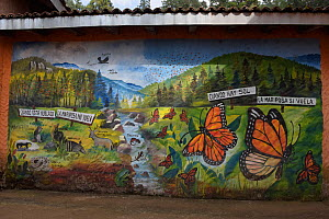 Mural of the mountain ecosystem of Monarch butterfly reserve at El Rosario Sanctuary Biodiversity, Mexico.  -  Patricio Robles Gil