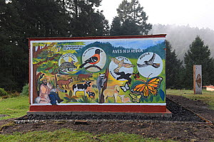 Painting of wildlife, birds and mammals, Sierra Chincua Sanctuary, Mexico.  -  Patricio Robles Gil
