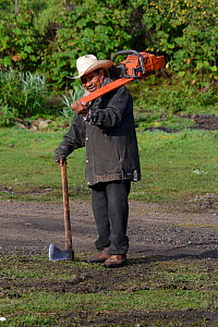 Logger - man carrying axe and a chainsaw, Sierra Chincua Sanctuary, Mexico.  -  Patricio Robles Gil