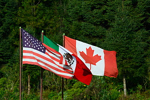 Flags of USA, Mexico and Canada representing the countries through which Monarch butterflies migrate, Sierra Chincua Sanctuary, Mexico.  -  Patricio Robles Gil