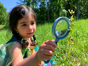 Young girl looks at a fly orchid (Ophrys insectifera) with a magnifying glass. Bedford Purlieus National Nature Reserve, Cambridgeshire, England, United Kingdom. Model Released  -  Alex Mustard