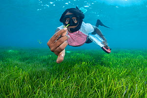 Marine biologist holding a seagrass flower. Seagrass is one of the few flowering plants found in the ocean and only produces flowers periodically. Laamu Atoll, Maldives. Indian Ocean.  -  Alex Mustard