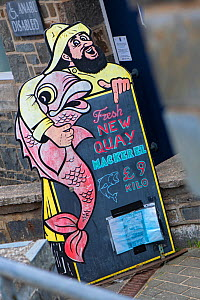 Fresh fish sign advertising mackerel (Scomber scombrus). New Quay, Ceredigion, Wales, United Kingdom. British Isles.  -  Alex Mustard