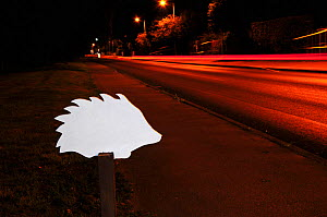 Ghost hedgehog sign, next to busy road at night. Placed to raise awareness of hedgehog road deaths, and to encourage careful driving. Dorset, England, UK. September.  -  Colin Varndell