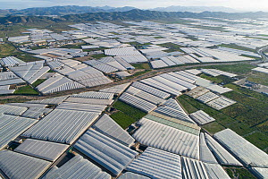 Aerial view of horticultural greenhouses for growing fruits and vegetables. The area is known as the �sea of plastic' and contains the largest concentration of greenhouses in the world, covering 26,00...  -  Milan Radisics
