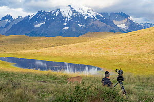 John Shier, BBC cinematographer, filming Puma (Puma concolor) family for Dynasty 2 series on private estancia bordering Torres del Paine National Park, southern Chile, southern Andes, South America  -  Mary McDonald