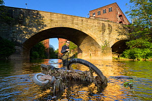 Angler fishing for Brown trout (Salmo trutta) on River Mersey, remains of dumped bike and shopping trolley in foreground. Greater Manchester, England, UK. May 2019.  -  Terry Whittaker