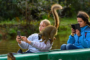 Tourist taking selfie of captive Common brown lemur (Eulemur fulvus) on her shoulder. Lemur Island, Andasibe, Madagascar. 2019.  -  Terry Whittaker