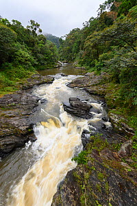 River in tropical rainforest. Ranomafana National Park, Madagascar. 2019.  -  Terry Whittaker