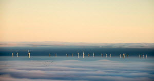 Hoyle Bank Windfarm in fog, with a flock of migrating birds, viewed from near Holywell, Flintsire, Wales, December. Winner of  Changing Landscapes category of Landscape Photographer of the Year compet...  -  Graham Eaton
