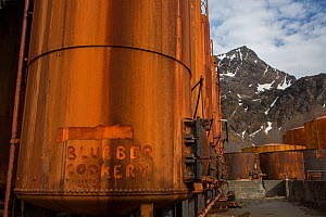 Rusty vats used to cook blubber at Grytviken, the largest former whaling station on South Georgia. November 2017.  -  Mark MacEwen