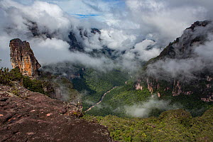 Rainforest with low cloud, view from top of a tepui, a flat-topped sandstone mountain. Canaima National Park, Venezuela. 2018  -  Mark MacEwen
