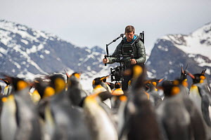 Cameraman Mark MacEwen filming King penguin (Aptenodytes patagonicus) colony, mountains in background. Taken on location for BBC Seven Worlds One Planet series. South Georgia. 2017. Model released.  -  Mark MacEwen
