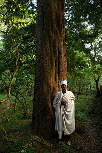 Priest beside East African yellowwood (Afrocarpus gracilior) tree trunk in church forest. Church forests remain largely intact within a degraded landscape as they are considered sacred. Near Zege, Eth...  -  Bruno D'Amicis