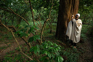 Priest under East African yellowwood (Afrocarpus gracilior) tree in church forest. Church forests remain largely intact within a degraded landscape as they are considered sacred. Near Zege, Ethiopia....  -  Bruno D'Amicis