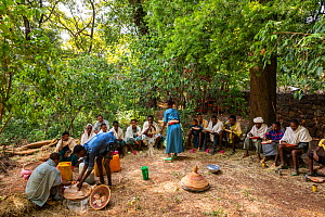 Churchgoers feasting under East African yellowwood (Afrocarpus gracilior) in church forest. Church forests remain largely intact within a degraded landscape as they are considered sacred. Near Zege, E...  -  Bruno D'Amicis