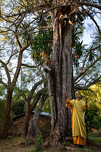 Priest ringing bell hanging from tree in church forest of Mandaba Medhane Alhem Orthodox Monastery. Church forests remain largely intact within a degraded landscape as they are considered sacred. Near...  -  Bruno D'Amicis
