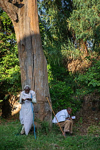 Men in church forest attending Sunday service at Debre Sina Orthodox Church. Church forests remain largely intact within a degraded landscape as they are considered sacred. Near Gorgora, Ethiopia. 201...  -  Bruno D'Amicis