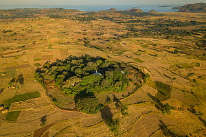 Aerial view of habitat fragmentation with degraded land surrounding church forest of Wagira Mariam Orthodox Church, in morning light. Forest cover in Ethiopia has fallen from 40% to 4.2% in 50 years....  -  Bruno D'Amicis