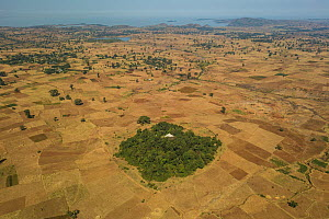 Aerial view of habitat fragmentation with degraded land surrounding church forest of Abe Libanose Orthodox Church. Forest cover in Ethiopia has fallen from 40% to 4.2% in 50 years. Church forests rema...  -  Bruno D'Amicis