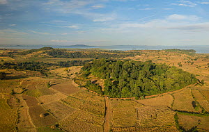 Aerial view of habitat fragmentation with degraded land surrounding church forest of Gindatemen Michail Orthodox Church. Forest cover in Ethiopia has fallen from 40% to 4.2% in 50 years. Church forest...  -  Bruno D'Amicis