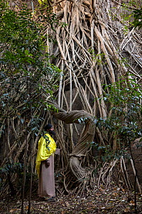 Priest examining vegetation in church forest on Tana Kirkos. Church forests are forest fragments surrounding orthodox churches, remaining intact in a largely deforested landscape as they are considere...  -  Bruno D'Amicis