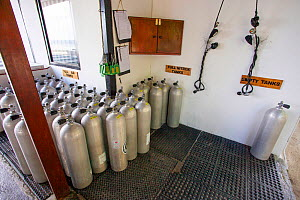 Nitrox scuba diving cylinders lined up at the filling station for the Wakatobi Resort, Indonesia.  -  David Fleetham