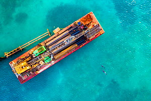 Bottlenose dolphin (Tursiops truncatus), two approaching a barge constructing a large dock and breakwater for super yachts in seagrass bed, aerial view. Harbour Island, Bahamas. 2019.  -  Shane Gross