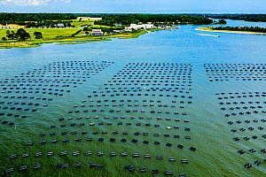 Cherrystone Aqua-Farms Clam and Oyster farm, aerial view. Cape Charles, Virginia, USA. May 2019.  -  Shane Gross