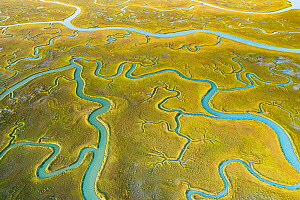 Aerial view of tidal channels in marshland. Mockhorn Island State Wildlife Management Area, Virginia, USA. May 2019.  -  Shane Gross