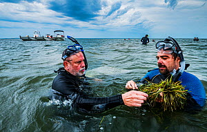 The Nature Conservancy scientist Bo Lusk teaching volunteer how to collect Eelgrass (Zostera marina) seeds for seagrass restoration project. Project led by Virginia Institute of Marine Science, Virgin...  -  Shane Gross