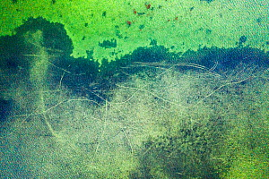 Aerial view of propeller scars in Seagrass bed, a result of careless boating in shallow beds. When propellers cut past the roots of Seagrass they inflict long-term damage to the beds. Florida Keys, US...  -  Shane Gross